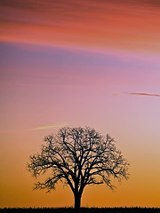 Sunday Morning Sunrise & A Lone Tree (YYZDez) Tags: toronto ontario canada tree sunrise 5d flickrcentral 70200 markham damncool yorkregion vftw thesecretlifeoftrees thebestsilhouettes ef70200f4isllens canonef70200f4isllens