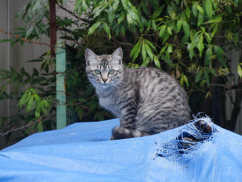 Today's Cat@2010-05-14