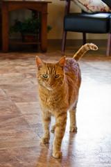 20100528-Shop Cat