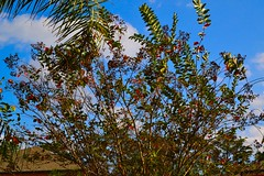 (SimplyDSLR) Tags: new house home nature beautiful outside vibrant bees creative bored bluesky testing beginner circularpolarizer richcolors