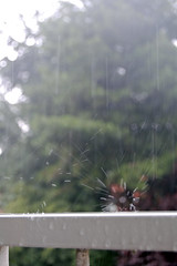 Summer Rain in the Netherlands on Flickr