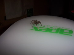A spider... (Lasdary) Tags: bug dark insect spider fear small bugs creepy ugly disgusting yuk arachnofobia lasdary