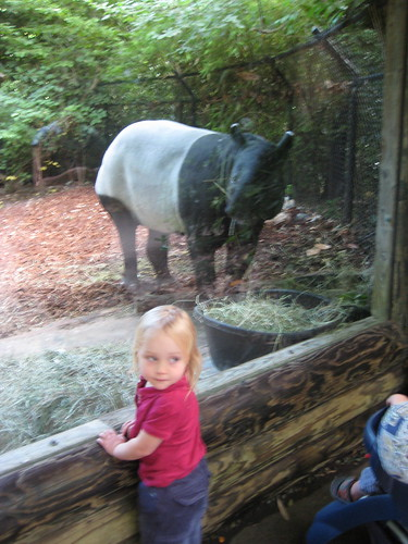 Tapir at the Zoo