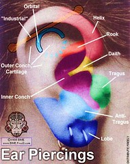 ear-piercings (wlowell05) Tags: piercing daith rook tragus earpiercing industrialpiercing lobepiercing