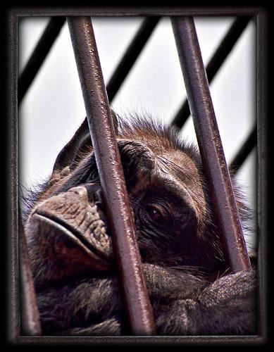 Prisoner no. 04/4