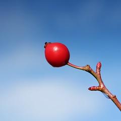 Cute little Berry (CunoCyn) Tags: red sky macro canon is berry berries 85mm usm simple redberry cokin gradual neutraldensity nd4 canon60d gradualneutraldensityfilter canon1585mm cokinpndgrad