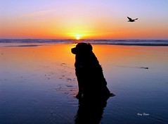 Sunset on a Pacific beach (Deby Dixon) Tags: blue sunset dog beach photography gold coast sand nikon gull explorer photojournalism pacificocean deby oceanshores traveler adventurer ddi naturephotographer abigfave travelphotographer superaplus aplusphoto travelwriter debydixon tourismphotography followingthebirds debydixonphotography debydixonimages crustymiddleagedwoman studyingtherelationshipofallelements outdoorchick northwestlover coeurdaleneidahophotographer crazyidahochick ddimages