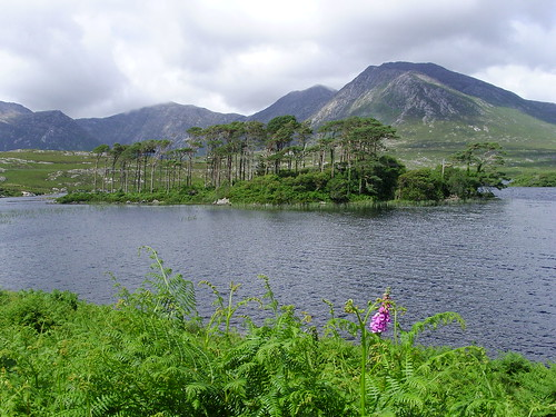 Connemara (186)