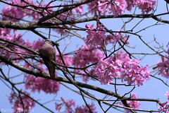 Primavera - by patrícia soransso 