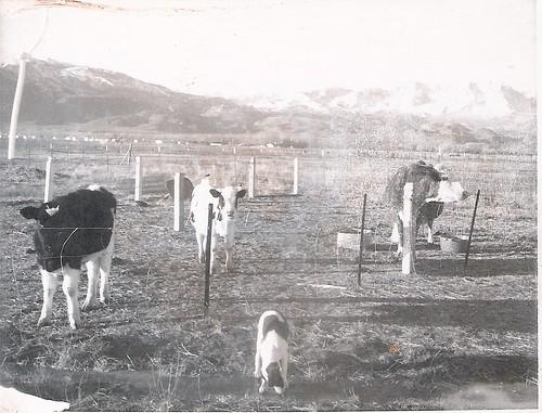the family farm.jpg