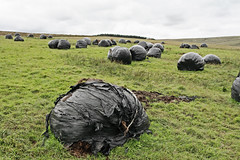 Old silage bales - by sparty lea
