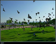 Karyaka... Sadece bizim deil... (YatLe_addict!) Tags: birds animal turkey trkiye izmir zmir karyaka hayvan kular