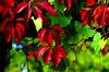 Burnin' (courriel_vert) Tags: autumn fall gtaggroup