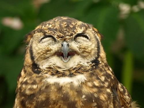 owl's smile!! :)