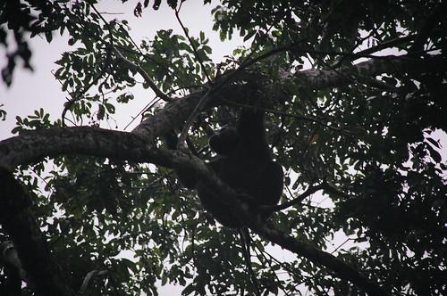Uganda - QENP Chembure Gorge Chimps