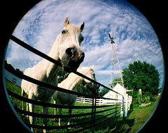grandpa's lawnmowers (sandcastlematt) Tags: ranch horses film fence lomo nebraska farm norfolk fisheye entitled grandpasranch lomofisheye fisheye2 norfolknebraska lomofisheye2