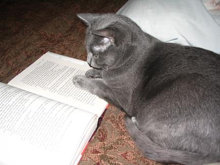 Cass Reading