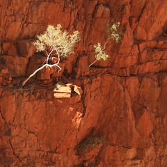 Licht en schaduw (look to see) Tags: australia bushcamp australi bachspicsgallery thegalleryoffinephotography