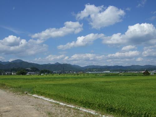 篠山の田園地帯