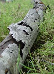 dead branch 1