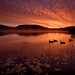 Sunrise with Ducks - by Peter Bowers