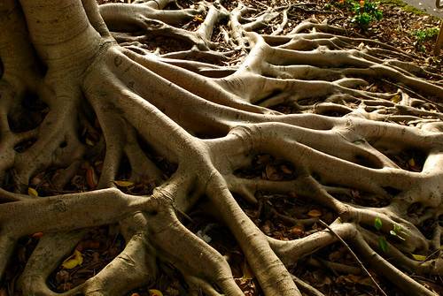 Twisted roots and intricate gnarls