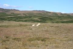 IMG_3336 (mkd719) Tags: iceland hiking myvatn hlidarfjall
