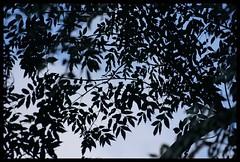 Symonds Yat - Aug 07 - 003 (Mr G33kman) Tags: sky leaves forest yat deane symonds of