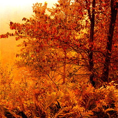 First autumn light! / Premire lumire dautomne! (Denis Collette...!!!) Tags: morning autumn light orange canada automne photography photo bravo colours photographie play searchthebest lumire couleurs first photograph qubec marais marshland matin photographe jeux xoxox magicdonkey outstandingshots artlibre infinestyle deniscollette