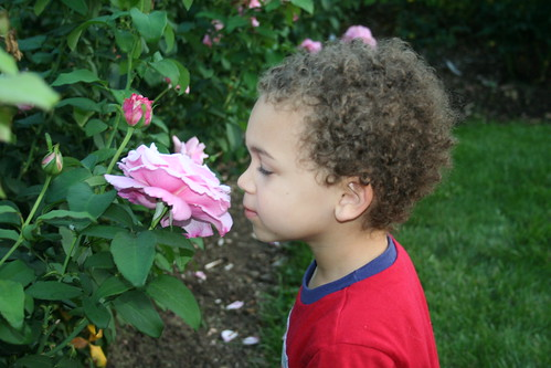 Aidan Stops and Smells a Rose