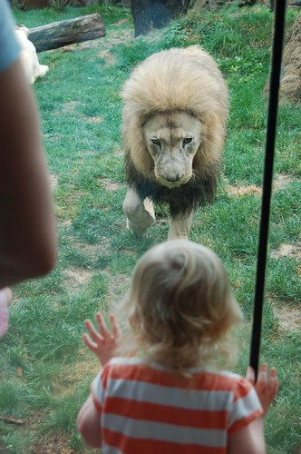 The Lion checks Leda out!