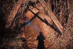 (shiphome) Tags: light shadow america mud southern thesouth kudzu 004 abandonedrailroad januarysun mcdowellcounty marionnc p3652009 20090104144433 oldtrestle