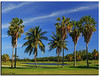Miami (iCamPix.Net) Tags: lighthouse florida postcard explore golfcourse fav favourite canonef2470mmf28lusm mostviewed golfclub miamidadecounty crandonpark keybiscaye mostwatched cannoneos1dsmarkiii icampixtechnologyleveli crandonparkgolfclub