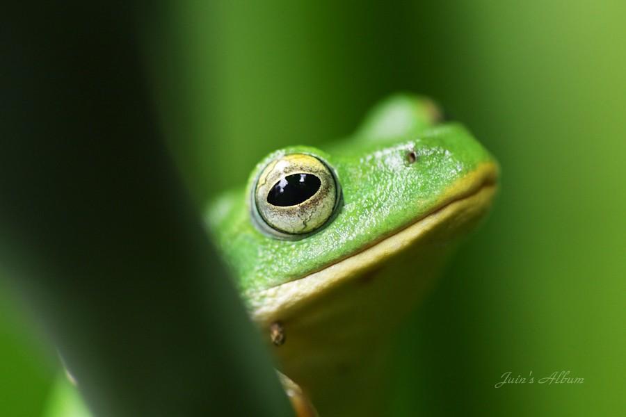 好蛙 原 來 你 在 這