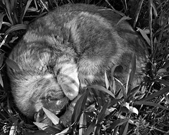 Sleeping Cat - IMG_5768-1 (Andreas Helke) Tags: sleeping bw test nature animal cat canon germany lens fur deutschland iso200 europa europe y sleep natur equipment katze dslr canoneos350d f71 picnik twa 0507 1100 canonefs1022mmf3545usm promote 22mm canon1022 lc20 candreashelke scoreme score31563 landkreiscoburg donothide canondslrlenscomparison cbwpicnikandreashelke popularold upload2010
