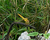 Dragonfly at Muang Boran Fishponds
