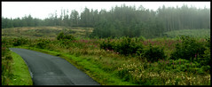 Travelling in Northern Ireland (little_frank) Tags: road wood uk travel wild panorama irish mist tree travelling verde green nature beautiful beauty grass fog pine alberi forest wonderful way landscape amazing fantastic scenery europe solitude alone driving loneliness peace silent view place natural unitedkingdom path dream peaceful tranquility natura special adventure erba trail fantasy londonderry silence stunning vegetation fir northernireland dreamy lonely wilderness fabulous pure nebbia idyllic prato impressive paesaggio derry irlandese vastness irlanda bellezza ulster bosco marvellous foresta unspoiled primordial primeval