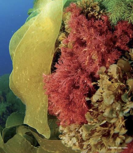 5187062492 c50ef3d5a0 Habitats en peligro - H�bitats en Peligro ? Conclusiones y Referencias Bibliogr�ficas