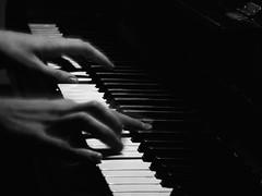 ... y el pianista (SigmaOrion) Tags: cat living piano gato columna jarron