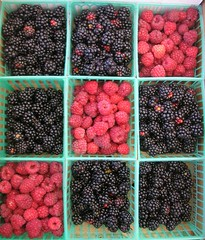 Tic-tac-toe berries - by blmurch
