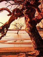 the heat is on... (liam.jon_d) Tags: billdoyle southaustralia australia coongie lake coongielakes nationalpark orange gold graphic remote globalwarming climatechange eucalyptuscoolabah eucalyptus coolabah coolibah australian landscape laustralie australien laustralia австралия dusud südaustralien delsud южная delsur arbres australiens australische bäume αυστραλιανά δέντρα alberi australiani австралийские валы árboles australianos paysage landschaft τοπίο paesaggio ландшафт paisaje 10faves top50 tws wilderness society wildernesssociety thewildernesssociety sa south campaign popular 100 1000 500 billartwork twsimset pickmeset mostinterestingimset mostintlandscapeimset popularimset mostinterestingsaimset mostinterestinglandscapes 100mostimset mostinterestingsouthaustralia 100mosthq