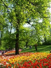 landscape (Saretta-9) Tags: flowers italy castle primavera torino spring sara italia olympus piemonte april fiori olly aprile turin castello piedmont 2010 e400 saretta pralormo