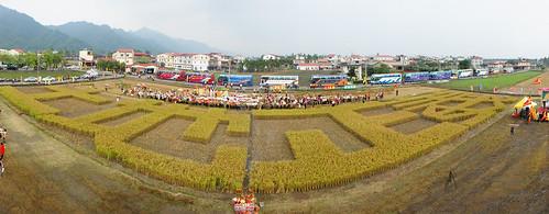 717夜宿凱道行動,農民將抗議用的秧苗帶回美濃耕種,收成「土地正義」。圖片提通:台灣農村陣線