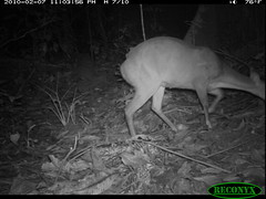 Nine-banded Armadillo (siwild) Tags: error panamacanal ninebandedarmadillo dasypusnovemcinctus taxonomy:common=ninebandedarmadillo geo:lon=9159166 sequence:index=97 otherstrangemammals taxonomy:group=otherstrangemammals taxonomy:species=dasypusnovemcinctus file:name=img0822jpg siwild:study=panamacanalmammalsurvey siwild:Rank=0 siwild:studyId=panamammal geo:locality=panama sequence:length=120 siwild:plot=72 sequence:id=67412 siwild:trigger=136616 siwild:location=2496 siwild:camDeploy=1926 siwild:date=201002072303560 siwild:imageid=1181154 file:path=dpicsrunsticksbci25ha1193img0822jpg siwild:region=panama BR:batch=sla0620101121083839 siwild:species=30 geo:lat=79847283 sequence:key=60