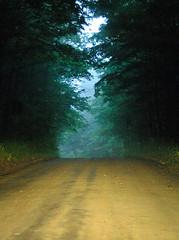 Mixed Light (hm-art) Tags: road trees light green rain way dusk path headlight coolest ysplix