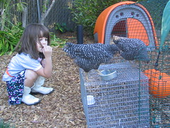 Hannah as chook-whisperer