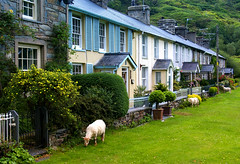 Beddgelert Houses (Brian The Euphonium) Tags: house wales sheep beddgelert instantfave 1on1photooftheday superbmasterpiece 1on1photoofthedayjune2007