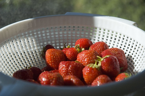strawberries in sunlight