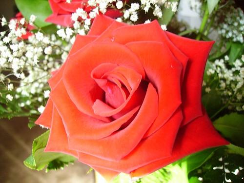 Anniversary Flowers 011