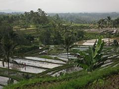 IMG_1667 (jxbfr) Tags: bali ricefields tanahlot balisunsets